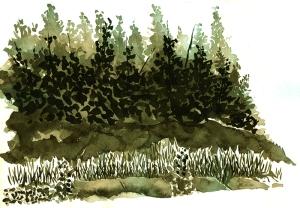 Cedars-1-sm